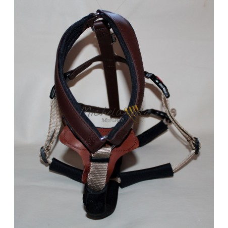 Greyhound Harness Hakuna Matata