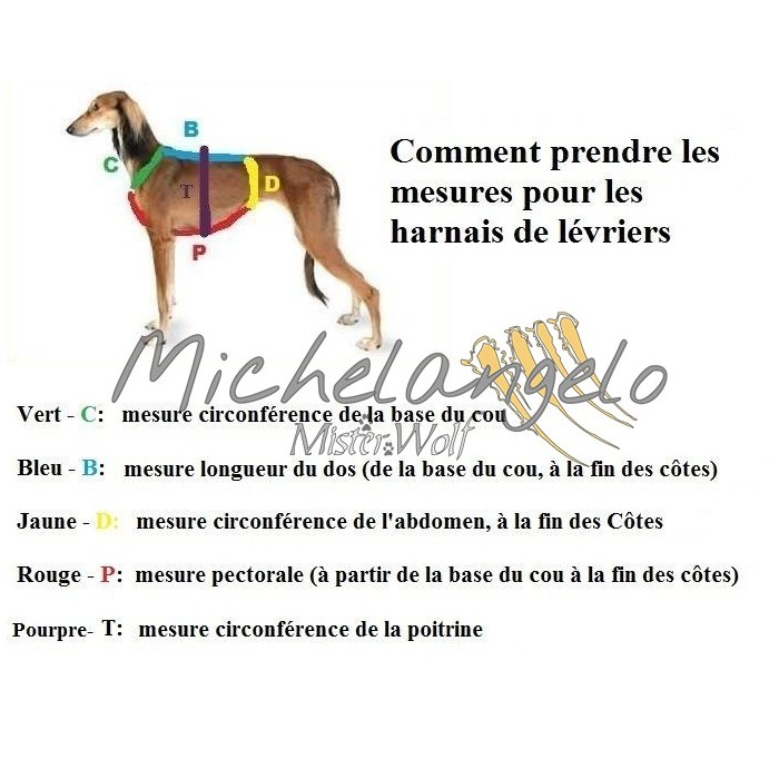 H harness for Greyhound