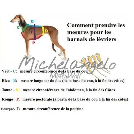 Greyhound Harness Priscilla