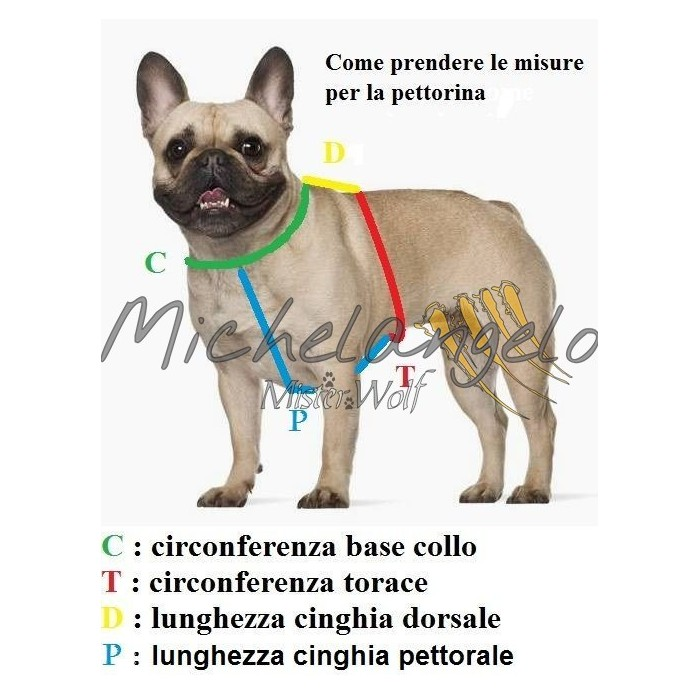 Harness for French Bulldog