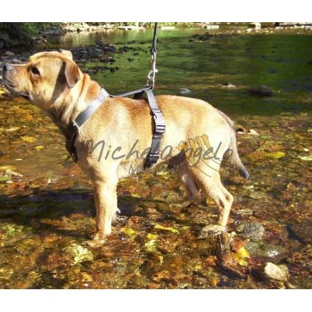 Pettorina per Staffordshire Bull Terrier in Biothane