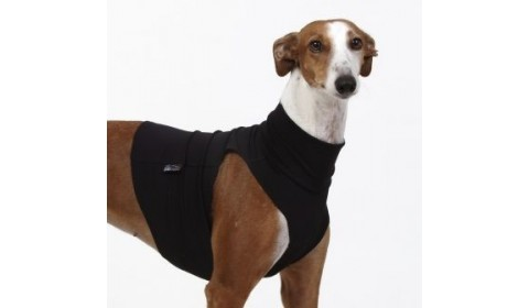 Clothing for greyhound