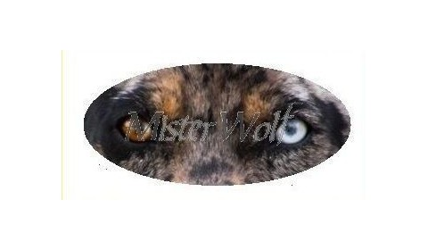 collars for catahoula leopard dog